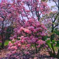 Another Lilac Festival has come and gone. We were fortunate enough to go the first day when the weather was perfect and the crowds were light. The lilacs weren't in […]